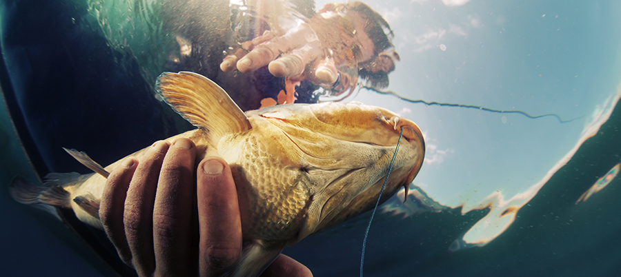 vo-fishing2